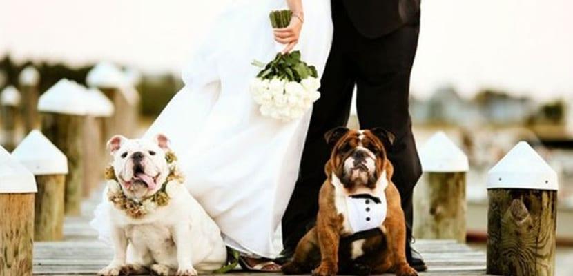 Perros en las fotos de boda