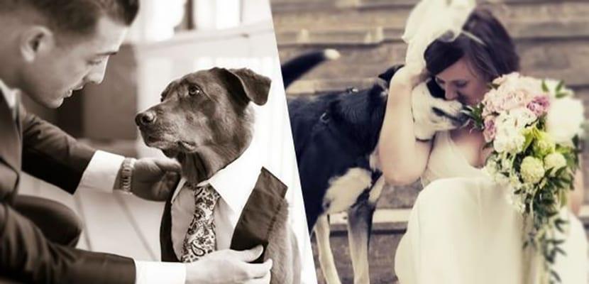 Fotos de boda con perros