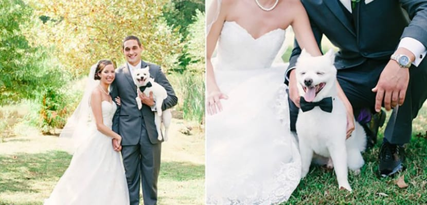 Perros en la boda con los novios