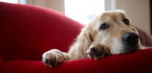 Perro en casa tumbado