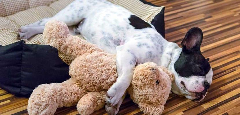 Perro en casa durmiendo