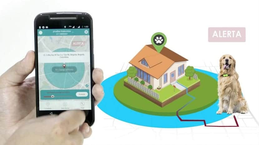 Aplicación GPS para perros donde se puede saber en todo momento la ubicacion de este