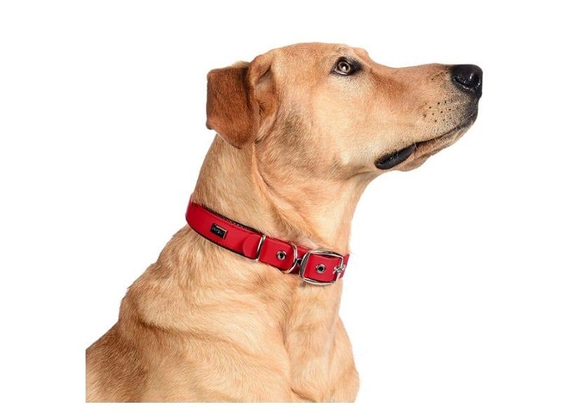 Collar de Perro Comodo y Duradero, fabricado con Trioflex