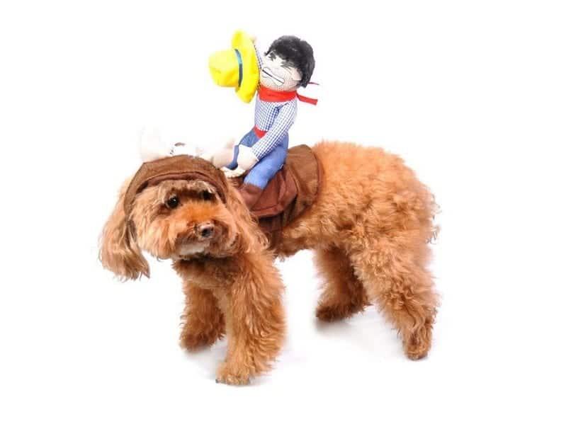 Disfraz para mascota con arnés y con un cobwoy