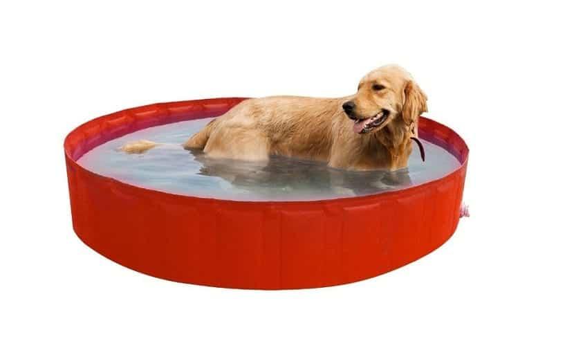 New Plast 0104 Piscina para Perro con diámetro de 180 cm