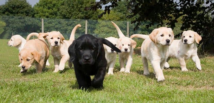 Cachorros paseando