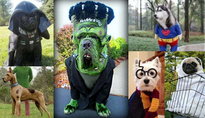 diferentes disfraces para perros de diferentes razas