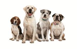 diferentes razas de perro de diferentes tamaños que llevan un GPS