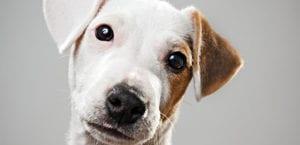 Perro y leismaniosis
