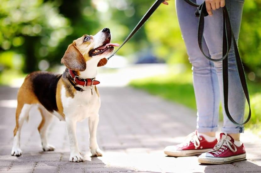 perro con collar y correa junto a su dueno