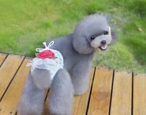 perro con pañal decorado con una flor