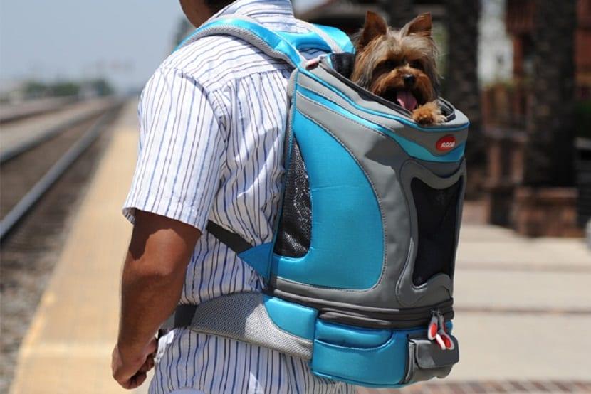 perro de tamaño pequeño en mochila de color azul