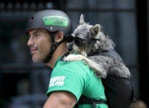 perro dentro de una mochila acompañado de su dueno que va en bici