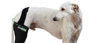 Luxación de cadera en perros