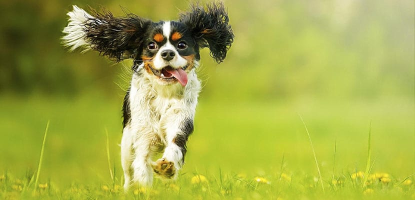 Perros con problemas en la cadera