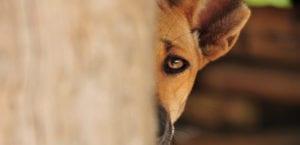 Perro maltratado con miedo