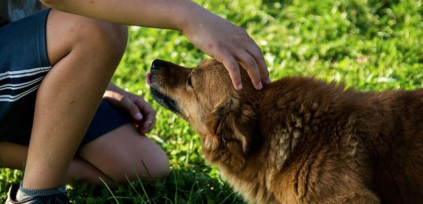 Darle cariño a un perro
