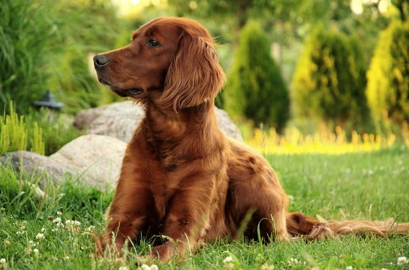 perro sentado en la hierba