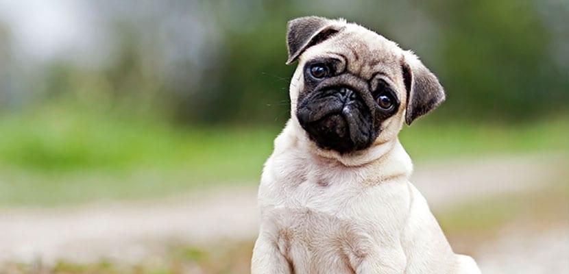Salud para perros
