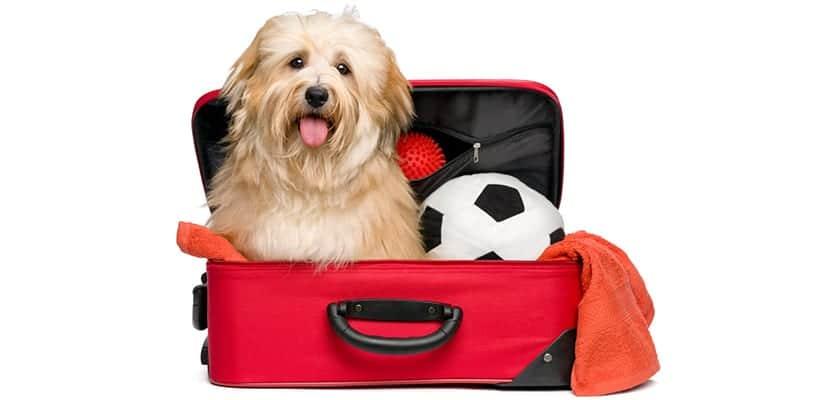 Perro en la maleta