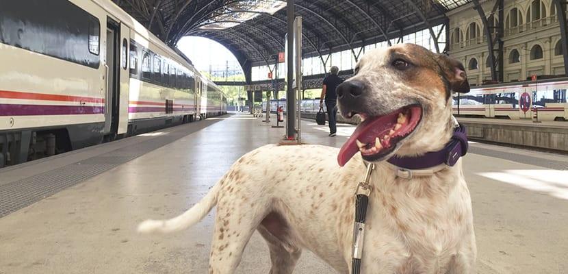 Perros y transporte público