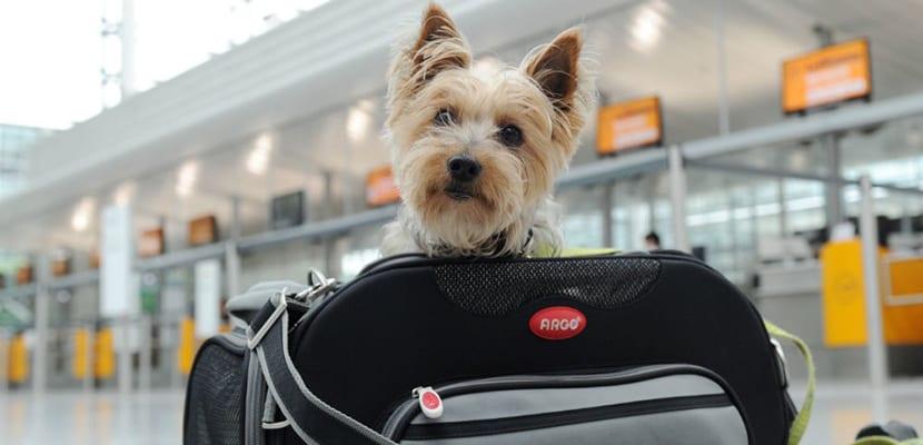 Perro en el transportín