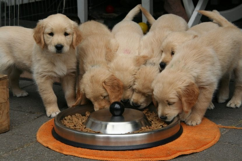 Royal Canin es una marca de piensos para animales
