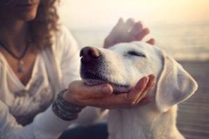 mujer acariciando perro de color blanco