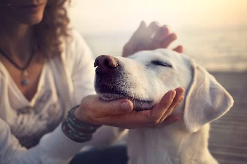 Leucocitos altos en perros causas
