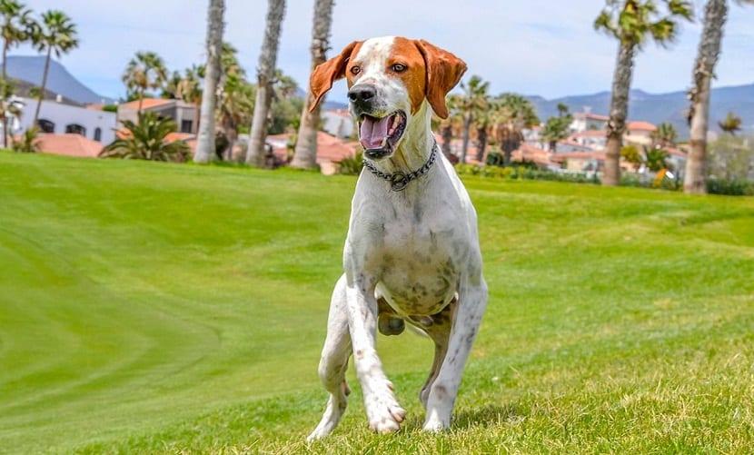 perro corriendo por el parque