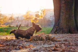 perro de tamano pequeno rodeado de hojas y arboles