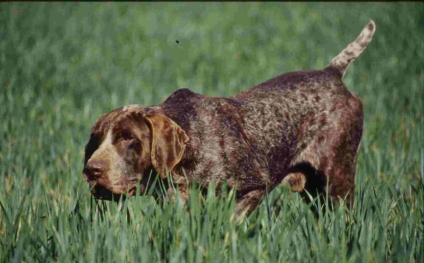 perro en posición de alerta entre la hierba