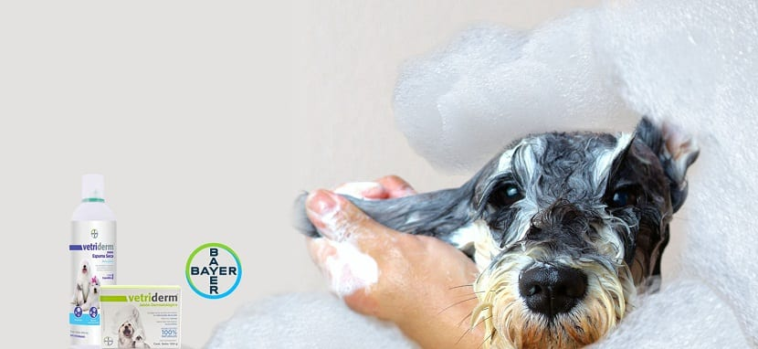 perro siendo bañado con locion Vetriderm