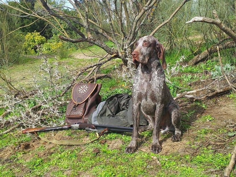 perro utilizado para la caza al lado de un arbol