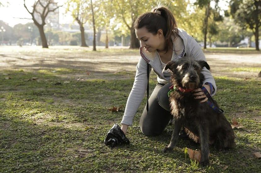persona recogiendo las cacas del perro