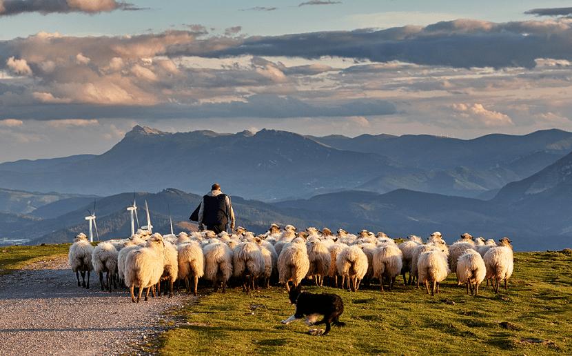 Rebaño de ovejas con pastor y perro