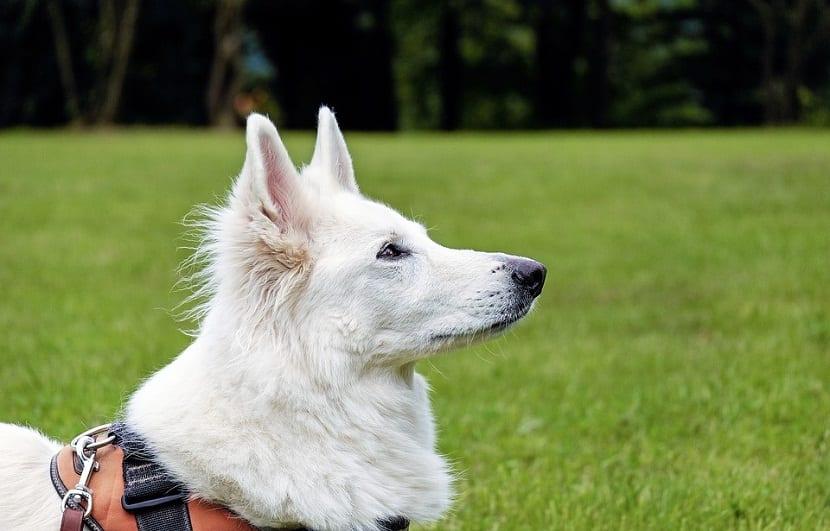 perfil de perro blanco entre un fondo verde