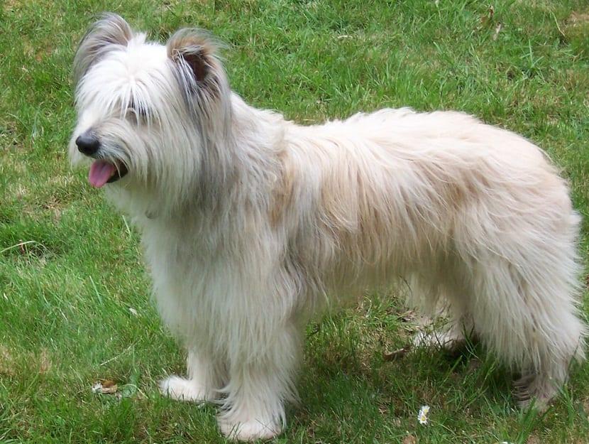 perro con las orejas altas posando en la hierba