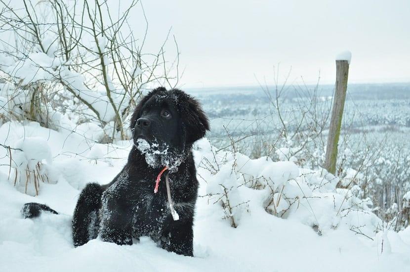 perro negro sentado entre la nieve de un monte