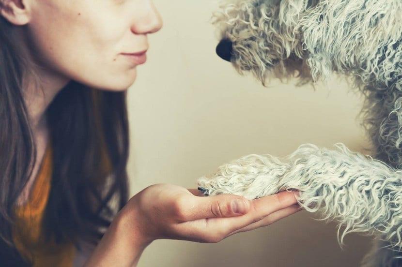 perro y chica se dan la mano o la pata