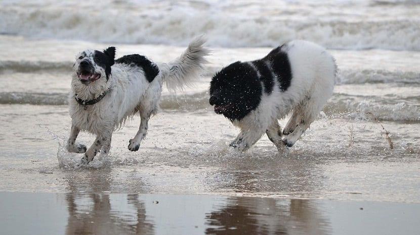 perros jugando a la orilla de la playa