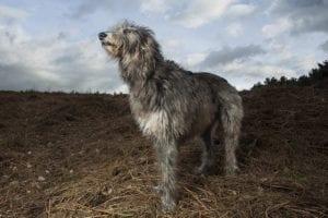perro con cuerpo largo y pequeña cabeza en medio de un campo