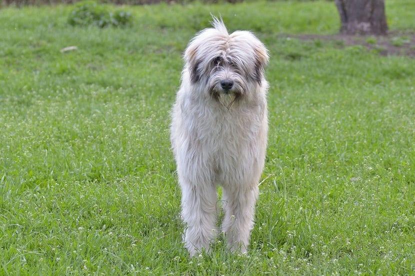 perro mirando de frente entre un campo
