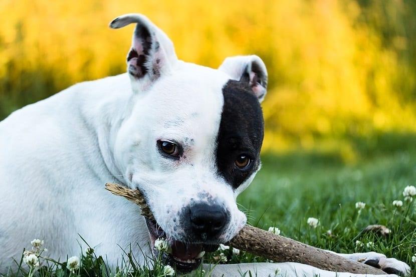 perro mordiendo un tronco en el suelo