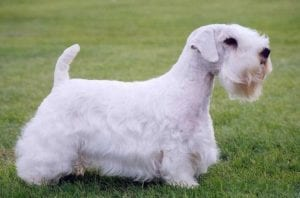 perro de patas cortas