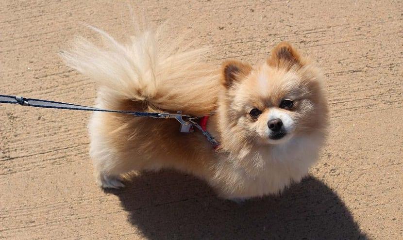 perro de tamano pequeno de paseo