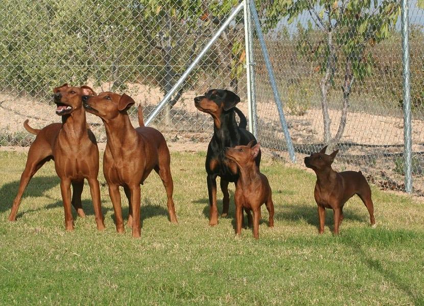varios perros de diferentes razas juntos