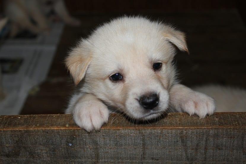 cachorro de perro con mirada triste