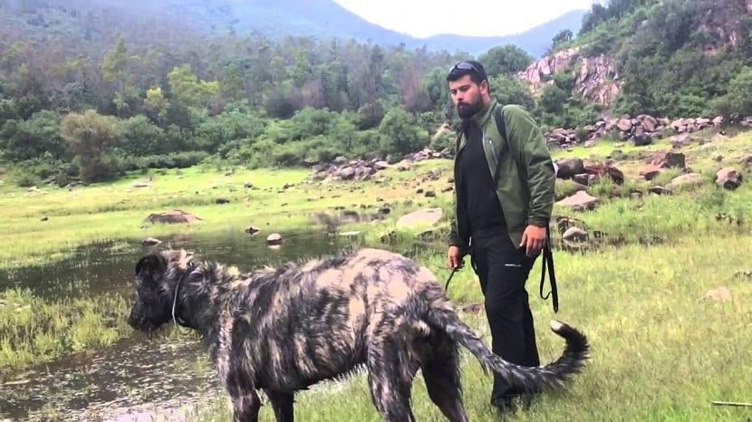 chico con perro pasando un rio