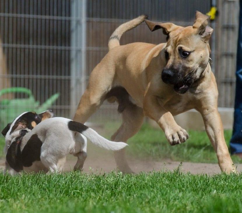 casa llena de perros de tamano grande